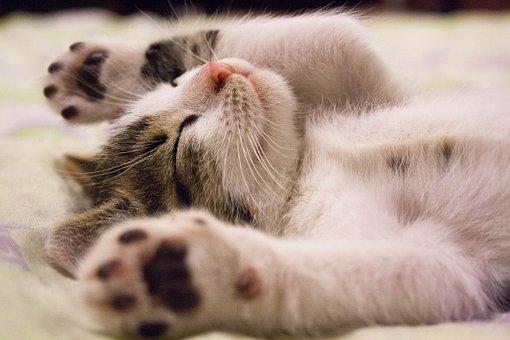 寝室風水⑤「寝る場所にベストなのは◯◯階」だった!〜寝るだけ開運風水〜